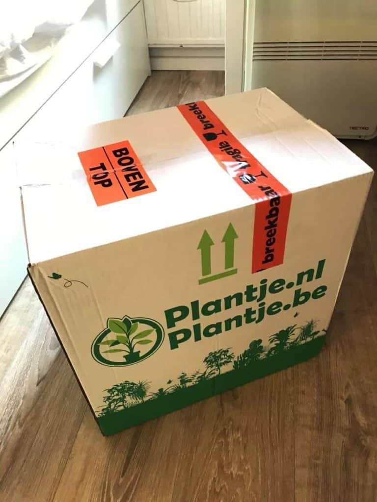 Ik ben dol op planten in mijn studentenkamer. Het vrolijkt de boel gelijk op en bepaalde soorten schijnen ook nog eens goed voor de luchtkwaliteit te zijn! Echter vind ik planten vaak nogal prijzig, waardoor ik meestal geen nieuwe koop, maar ze in plaats daarvan stek. Ook super leuk natuurlijk, maar na mijn 8493902e Monstera Deliciosa stekje was ik wel toe aan een paar nieuwe planten soorten. Oplossing: De Groene Kneusjes box. Voor €23,95 krijg je dan een doos met minimaal 10 plantjes! Zelfs inclusief de verzendkosten betaal je minder dan €3 per plant. Een super goede deal dus!!